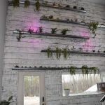 Main entrance living plant wall